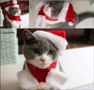 Christmas ideas for pets - cat hat